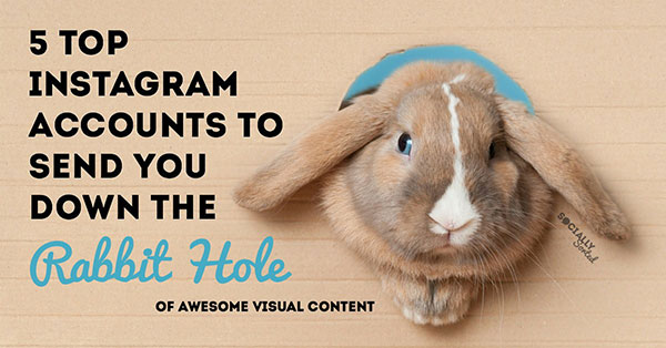 5 Instagram Accounts to Send You Down a Rabbit Hole (of Awesome Visual Content)